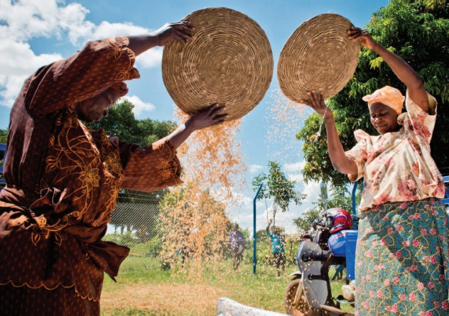 Women remove chaff from their grain by winnowing. WFP is determined to cut back on post harvest losses among Uganda's smallholder farmers. COURTESY PHOTO