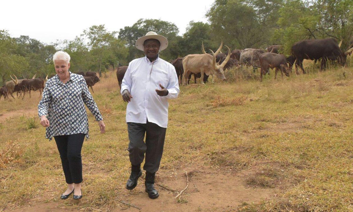 Malac cows 6