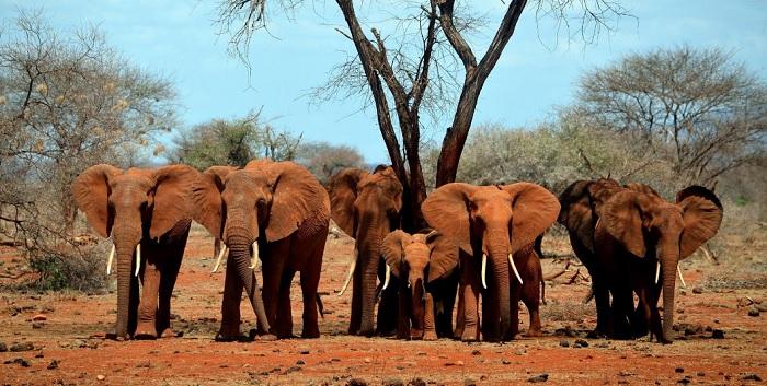 elephants-5