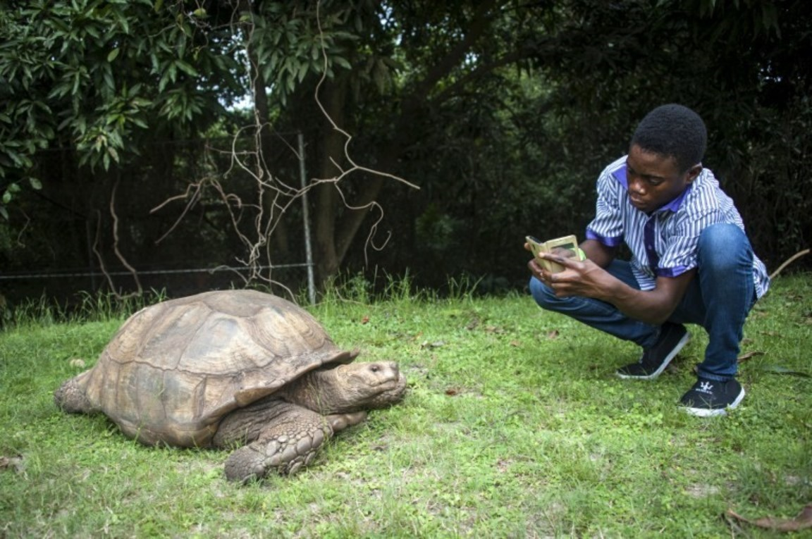A man takes a picture of a tortoise in the Lekki Conservation Centre in Lagos, on September 8, 2016. Traffic jams may clog the city and the beaches look like garbage dumps, but for the Lagos state government developing tourism is now a do or die matter. PHOTO AFP