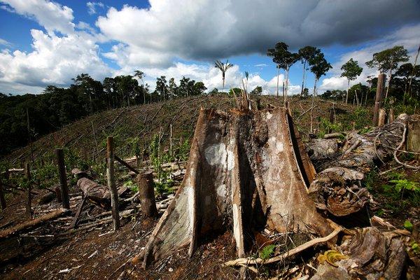 hazards of deforestation Free essays on hazards of deforestation get help with your writing 1 through 30.