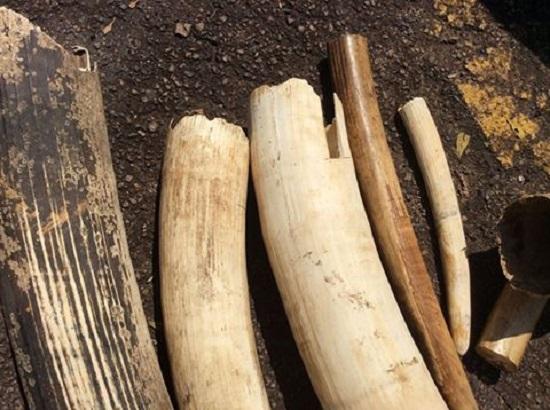 ivory-poaching-1