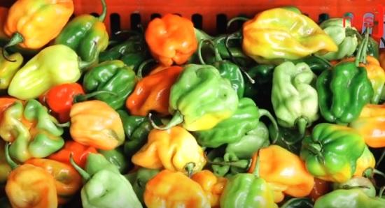 nbs-pepper-1