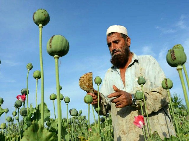 opium-1