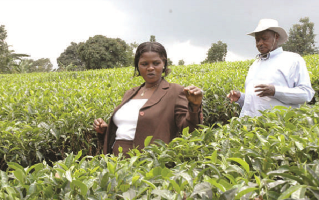 Uganda fails to gain from high tea prices